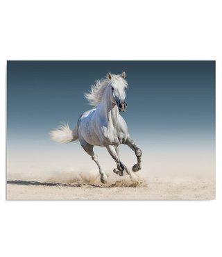 Schilderij Paard rennend op het strand, 2 maten