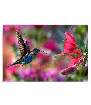 Schilderij Kolibrie, 2 maten