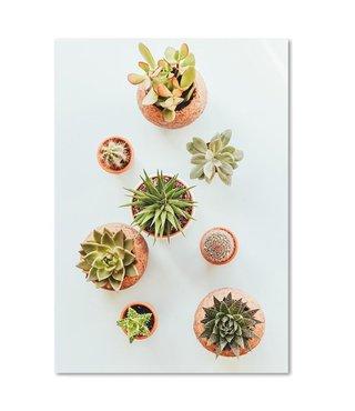 Schilderij Verschillende cactussen, 4 maten