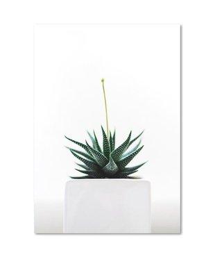 Schilderij Plant in een pot, 4 maten, wit-groen