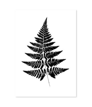 Schilderij Varen blad, 4 maten, zwart-wit