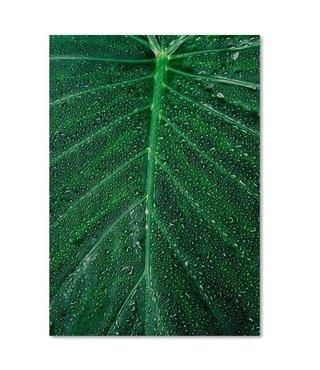 Schilderij Waterdruppels op een blad, 4 maten, groen