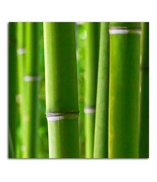 Schilderij Bamboe stengels, 2 maten, groen-wit