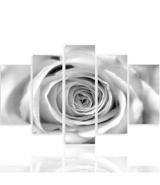 Schilderij , Witte roos , 4 maten , 5 luik , zwart wit , Premium print , XXL