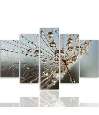 Schilderij , Spinnenweb met Dauwdruppels , 4 maten , 5 luik , multikleur , Premium print XXL