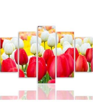 Schilderij Rode en witte Tulpen, 5 luik, 4 maten, XXL, wanddecoratie