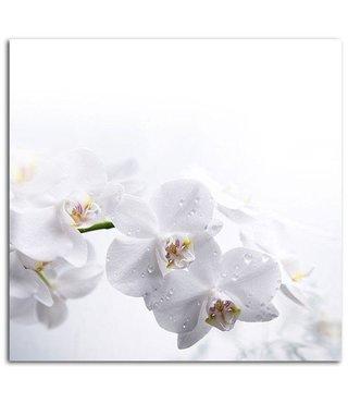 Schilderij - Witte orchidee , 2 maten , zwart wit (wanddecoratie)