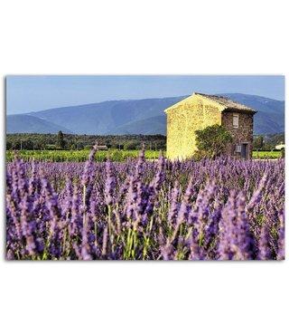 Schilderij - Huis in een lavendel veld, 100x70cm, premium print