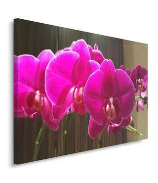 Schilderij - Prachtige orchidee, 3 maten, premium print