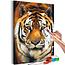 Doe-het-zelf op canvas schilderen - Asian Tiger