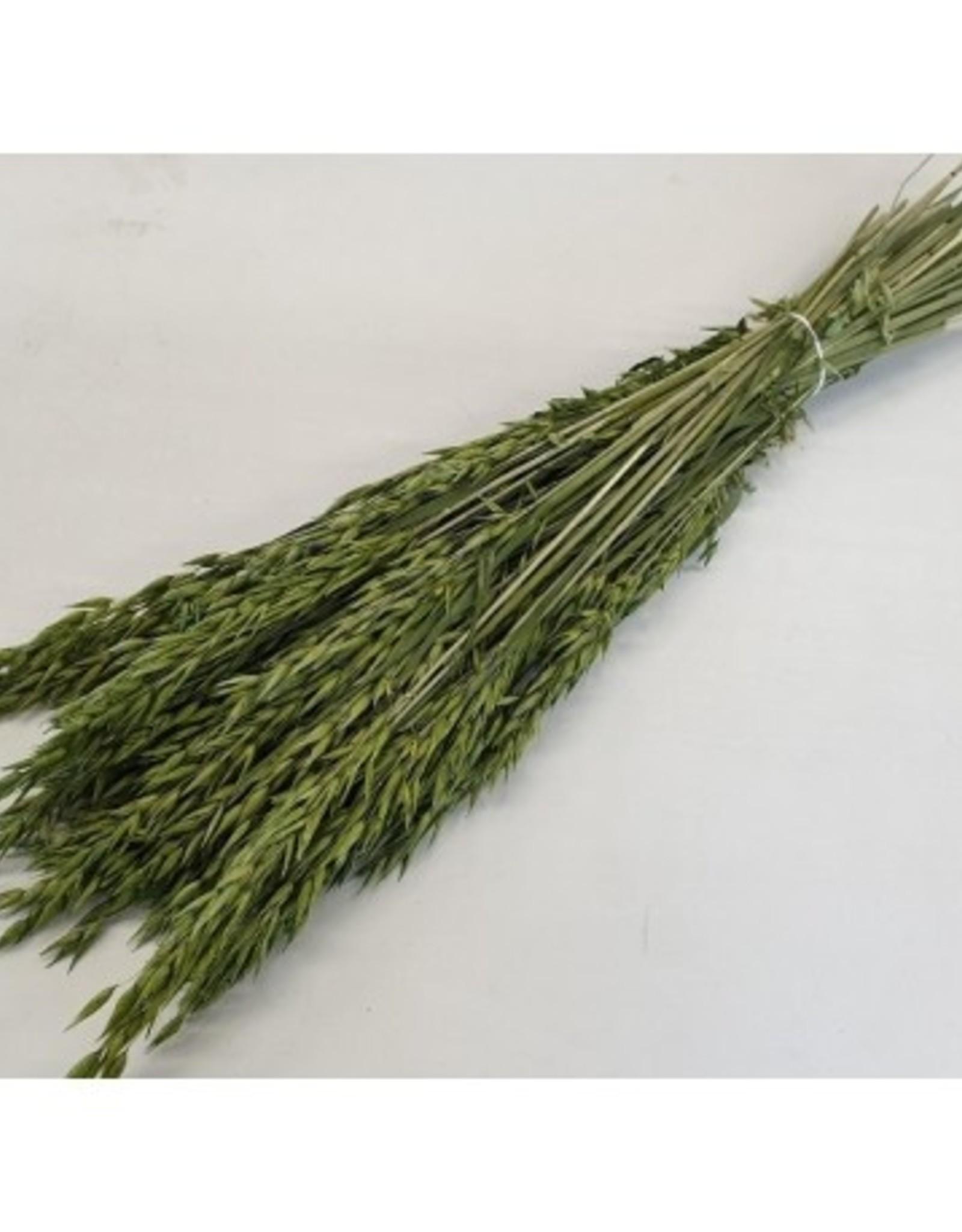 Haver Groen