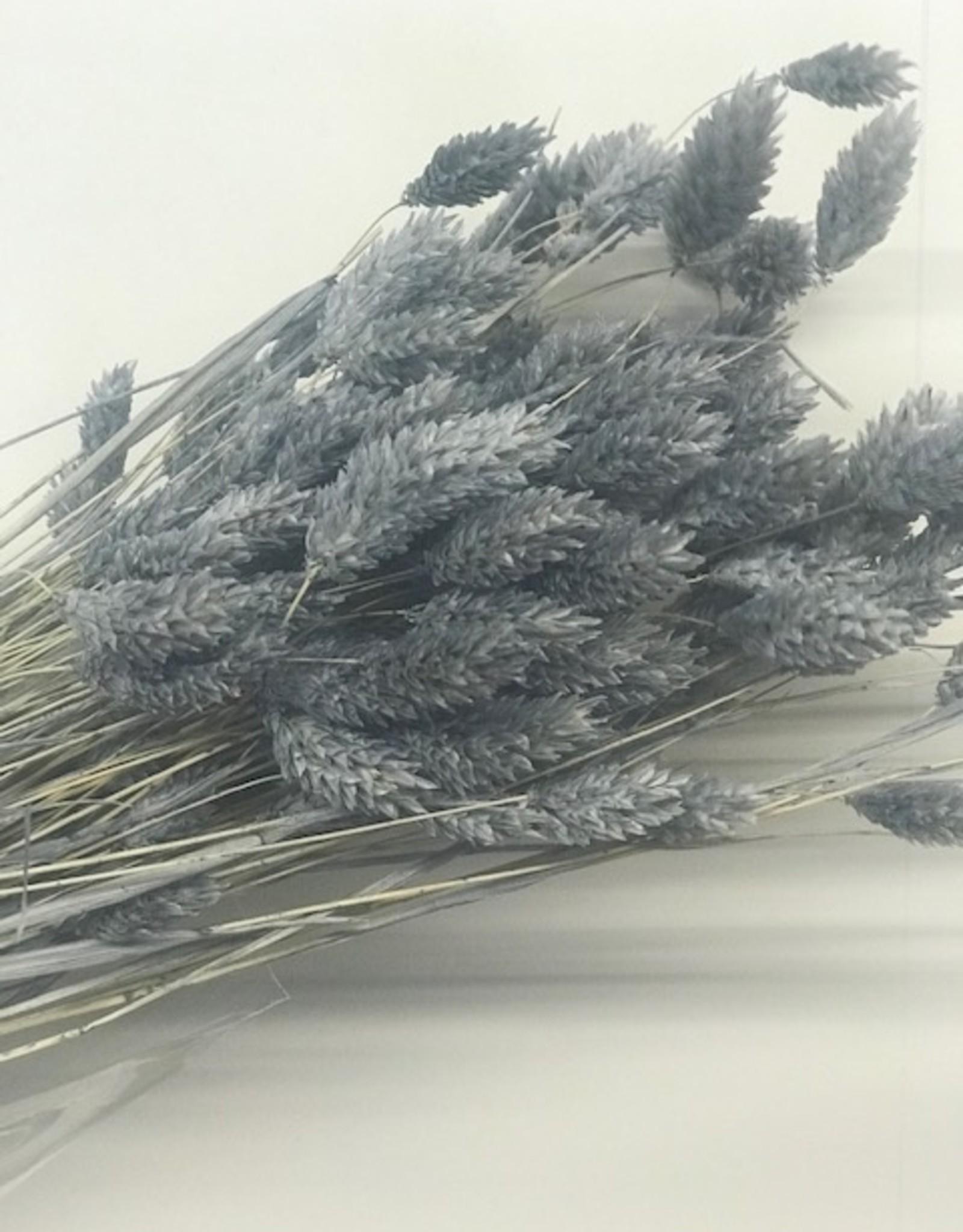 phalaris grijs