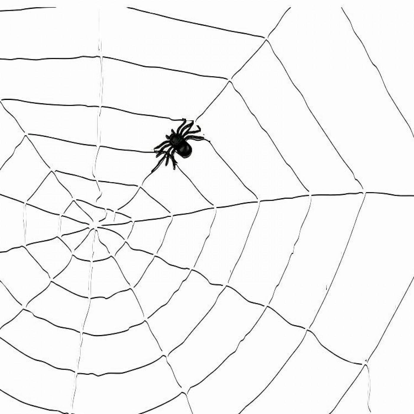 Spinnenweb Koord + 1 Spin | Wit