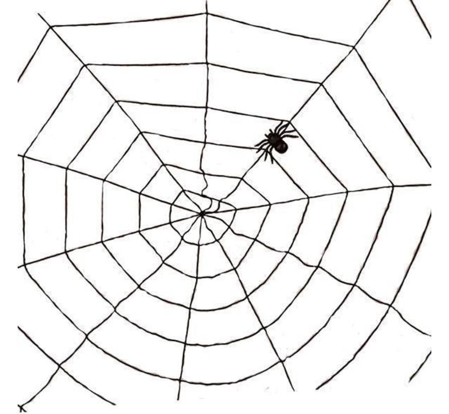 Spinnenweb Koord + 1 Spin | Zwart