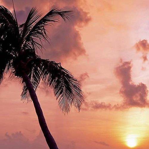Deursticker palmboom avond 90 x 200 cm