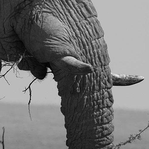 Deursticker olifant 90 x 200 cm