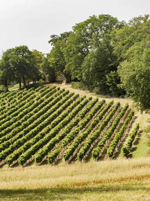 Well of Wine Sauvignon Blanc 2018