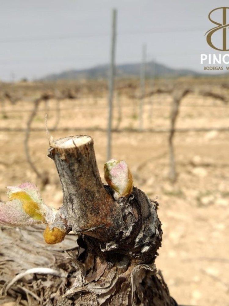 La Bodega de Pinoso La Bodega de Pinoso Vergel Tinto Seleccion 2015