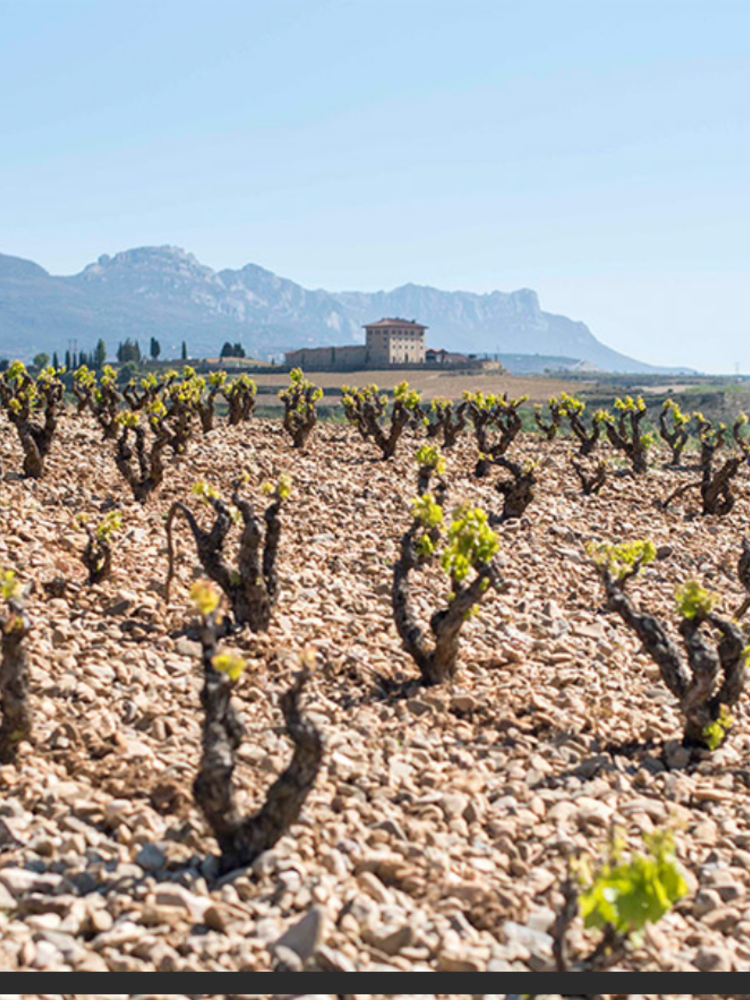 López de Haro Rioja Reserva 2015