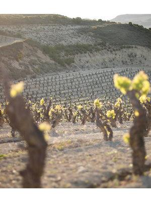Lopez de Haro Rioja Crianza 2014 ½ fles