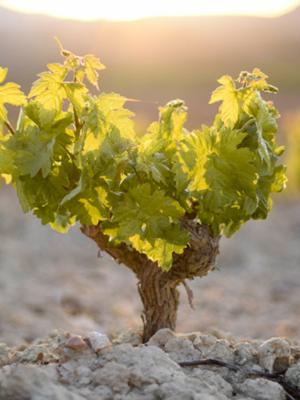 López de Haro Rioja Joven Tempranillo 2018