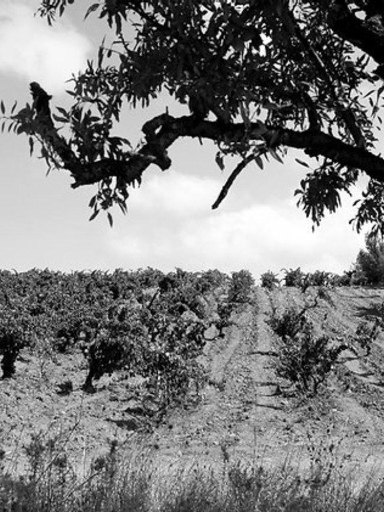 Domaine Singla Heritage de Temps 'Rivesaltes Ambre' 1951 - Copy