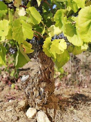 Beyra Vinhos De Altitude Tinto Reserva 2017