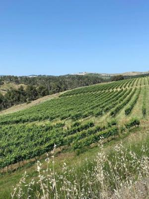 Galil Mountain Cabernet-Sauvignon 2018