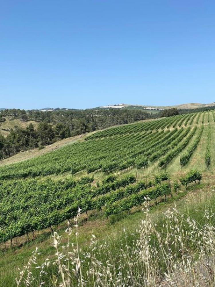 Galil Mountain Flagship wine 'Yiron' 2016