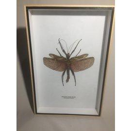 De Wonderkamer Phasme (Heteropteryx dilatata)