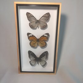 De Wonderkamer Assortiment Vlinders