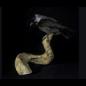 De Wonderkamer Kauw op hoorn (Coloeus monedula)