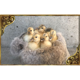 De Wonderkamer Ducklings on fur in copper kettle
