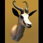 De Wonderkamer Springbok Trophée