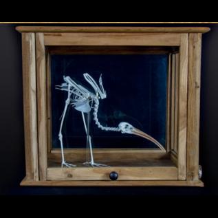 De Wonderkamer Squelette ibis rouge dans une armoire de pharmacie antique