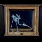 De Wonderkamer Skelet Ibis in antieke apotheekkast