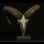De Wonderkamer Mouflon skull