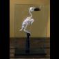De Wonderkamer Skelet Neushoornvogel (Bucerotidae) in stolp