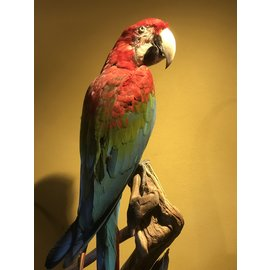 De Wonderkamer Red-and-green macaw (Ara chloropterus)
