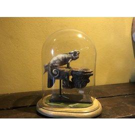 De Wonderkamer Chameleon in glass dome (Chamaeleo chamaeleon)
