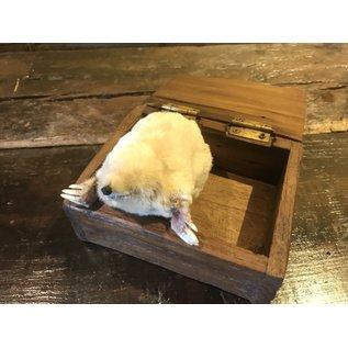 De Wonderkamer Albino mole (Talpa europaea)