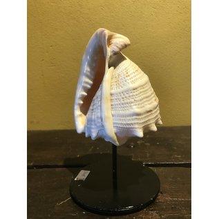 De Wonderkamer Shell on pedestal