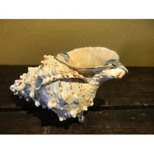 De Wonderkamer Shell (Ashtray)