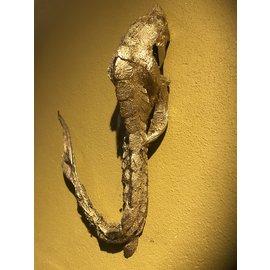De Wonderkamer Mummified sturgeon (golden colour)