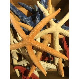 De Wonderkamer Starfishes