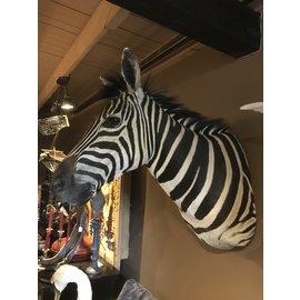 De Wonderkamer Zèbre (Equus quagga)