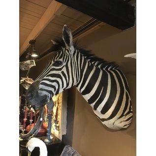 De Wonderkamer Zebra  (Equus quagga)