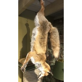 De Wonderkamer Hanging fox