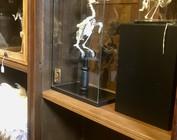 Crânes & squelettes