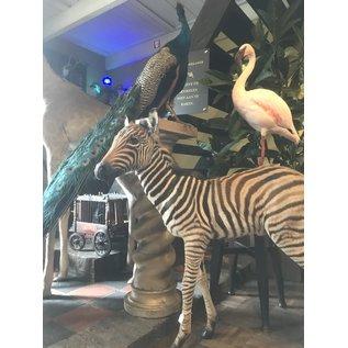De Wonderkamer  Zebra veulen (full mount)